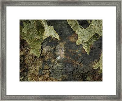 Tree Memories # 7 Framed Print by Ed Hall
