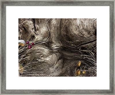 Tree Memories # 9 Framed Print by Ed Hall
