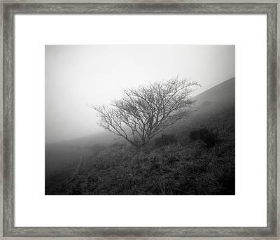 Tree Mist Framed Print by Benjamin Garvey