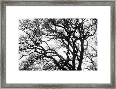 Tree Mist Framed Print by Tim Gainey