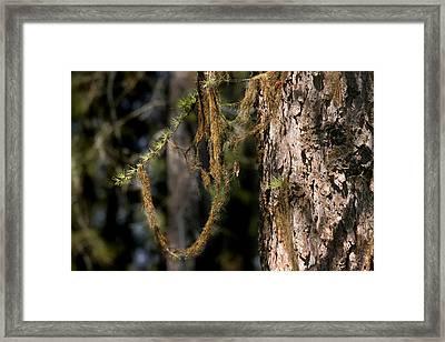 Tree Moss - Green Soft Beauty Framed Print by Christine Till