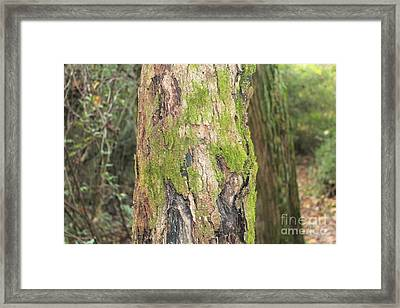 Tree Moss Framed Print by Amy Wilkinson