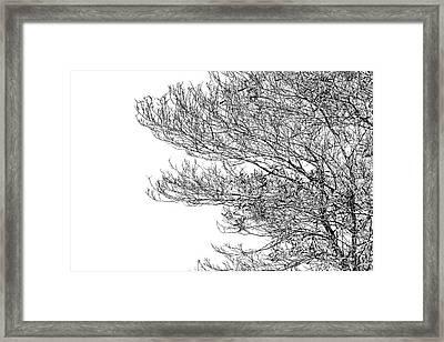 Tree No. 7-2 Framed Print