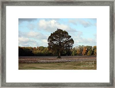Tree No Fog Framed Print by Amanda Barcon