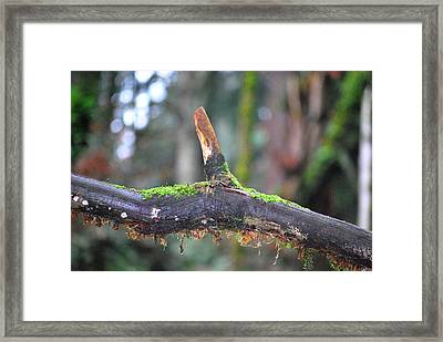 Tree Nose Framed Print by Sergey Nassyrov