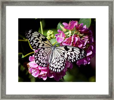 Tree Nymph Butterfly Framed Print