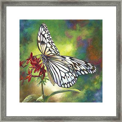 Tree Nymph Butterfly Framed Print by Nancy Tilles
