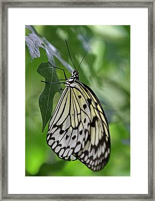 Tree Nymph Framed Print by Juergen Roth