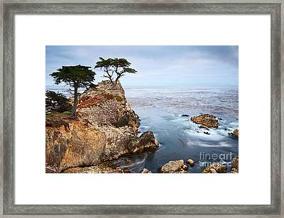 Tree Of Dreams - Lone Cypress Tree At Pebble Beach In Monterey California Framed Print
