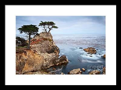 Cypress Framed Prints