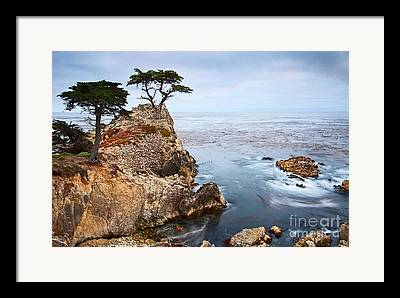 Cypress Framed Prints