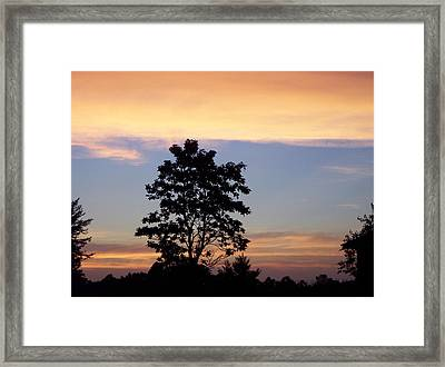 Tree Of Dreams  Framed Print