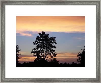 Tree Of Dreams  Framed Print by Traci Goebel
