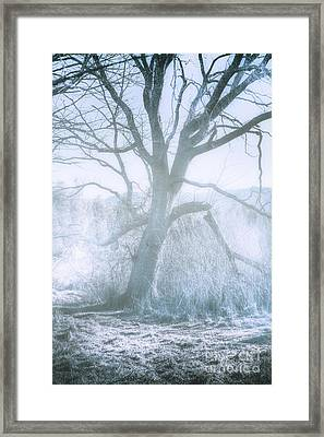Tree Of Frost Bite Framed Print by Jorgo Photography - Wall Art Gallery