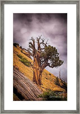 Tree Of Hope Framed Print by Dennis Wagner