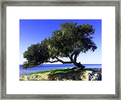 Tree Of Life - 3 Framed Print by Tap On Photo