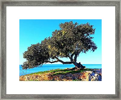 Tree Of Life - 5 Framed Print by Tap On Photo