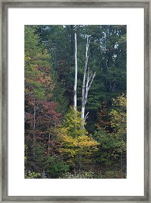 Tree Of Life Framed Print by Bj Hodges