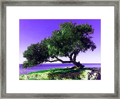 Tree Of Life - 2 Framed Print by Tap On Photo