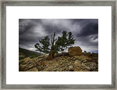 Tree Of Life Framed Print by Dennis Wagner
