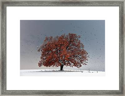 Tree Of Life Framed Print by Evgeni Dinev