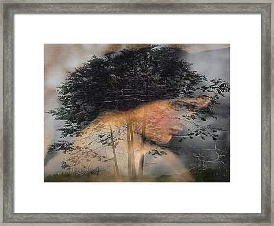 Tree Of Life Framed Print by Kathleen Romana