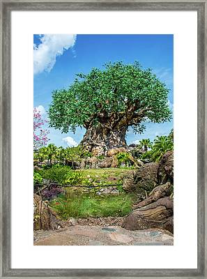Tree Of Life Framed Print by Pamela Williams