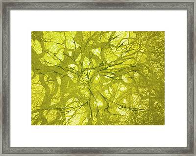 Framed Print featuring the mixed media Tree Of Life by Rachel Hames
