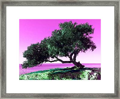 Tree Of Life - 1 Framed Print by Tap On Photo