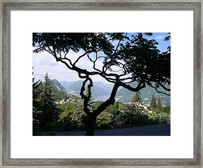 Tree Of Life Framed Print by Ursula Wright