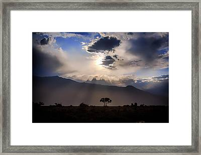 Framed Print featuring the photograph Tree Of Light by Cat Connor
