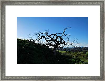 Framed Print featuring the photograph Tree Of Light - Landscape by Matt Harang