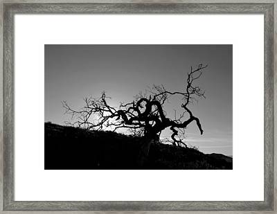 Framed Print featuring the photograph Tree Of Light Silhouette Hillside - Black And White  by Matt Harang