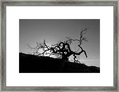 Tree Of Light Silhouette Hillside - Black And White  Framed Print