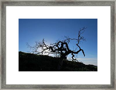 Framed Print featuring the photograph Tree Of Light Silhouette Hillside by Matt Harang