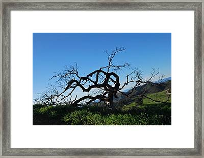 Framed Print featuring the photograph Tree Of Light - Slanted Horizon by Matt Harang