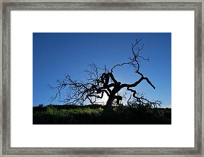 Framed Print featuring the photograph Tree Of Light - Straight View 2 by Matt Harang