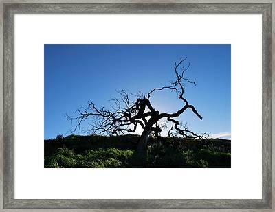 Framed Print featuring the photograph Tree Of Light - Straight View by Matt Harang