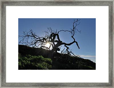 Framed Print featuring the photograph Tree Of Light - Sunshine Through Branches by Matt Harang