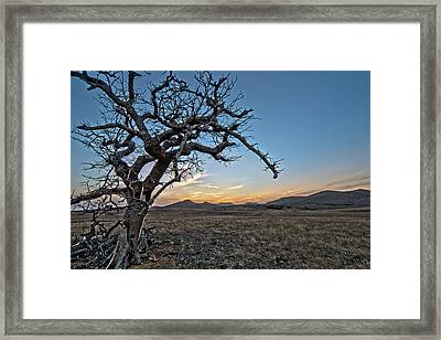 Tree Of Lost Souls Framed Print