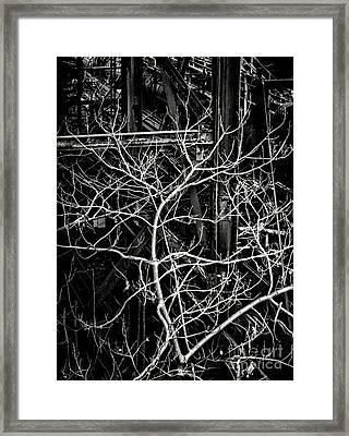 Tree Of Non Life Framed Print