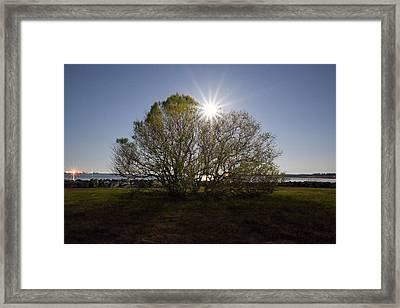 Tree Of The Night Framed Print