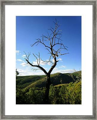 Tree Framed Print by Oliver Johnston