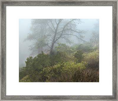 Tree On A Foggy Hill Framed Print