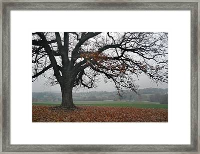 Tree On A Hill Framed Print by Gordon Beck