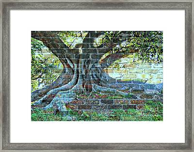 Tree On A Wall Framed Print