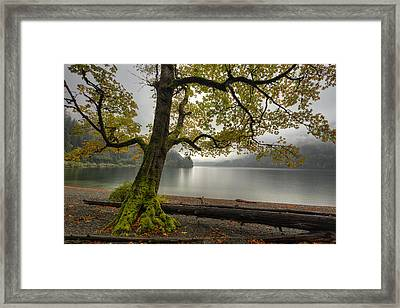 Tree On Cameron Lake Framed Print by Mark Kiver