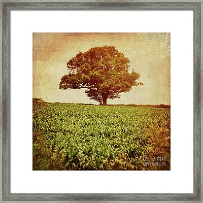 Framed Print featuring the photograph Tree On Edge Of Field by Lyn Randle