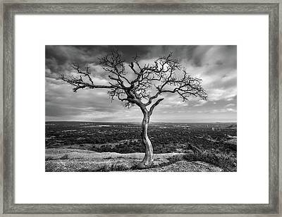 Tree On Enchanted Rock In Black And White Framed Print