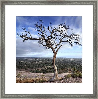 Framed Print featuring the photograph Tree On Enchanted Rock - Square by Todd Aaron